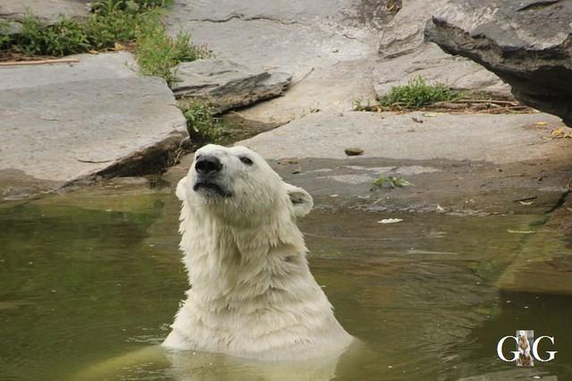 Zoo und Tierpark 03.06.201834