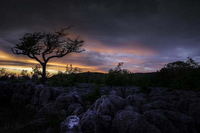 Hawthorn Tree, Yorkshire Dales, RICOH PENTAX K-1, HD PENTAX-D FA 24-70mm F2.8 ED SDM WR
