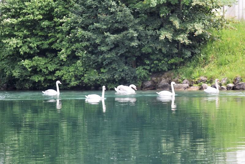Swan 27.05 (4)