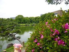 Audino in Fukagawa, Tokyo 99 (Kiyosumi Garden)