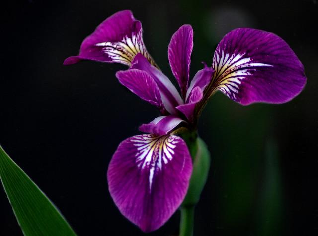 ##farbe lila, Pentax K-5 II, Tamron AF 70-300mm F4-5.6 LD Macro 1:2