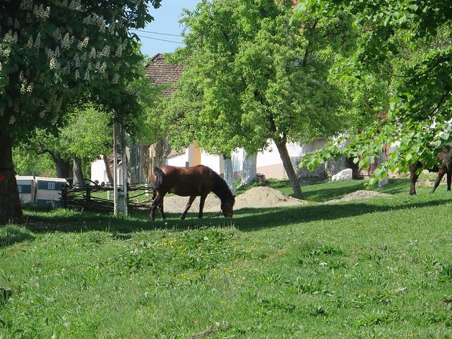 Mesendorf, Romania