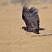 A Giant Take Off.. by Anirban Sinha 80