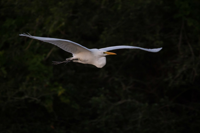 Egret The Morning