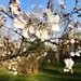 massachusetts spring