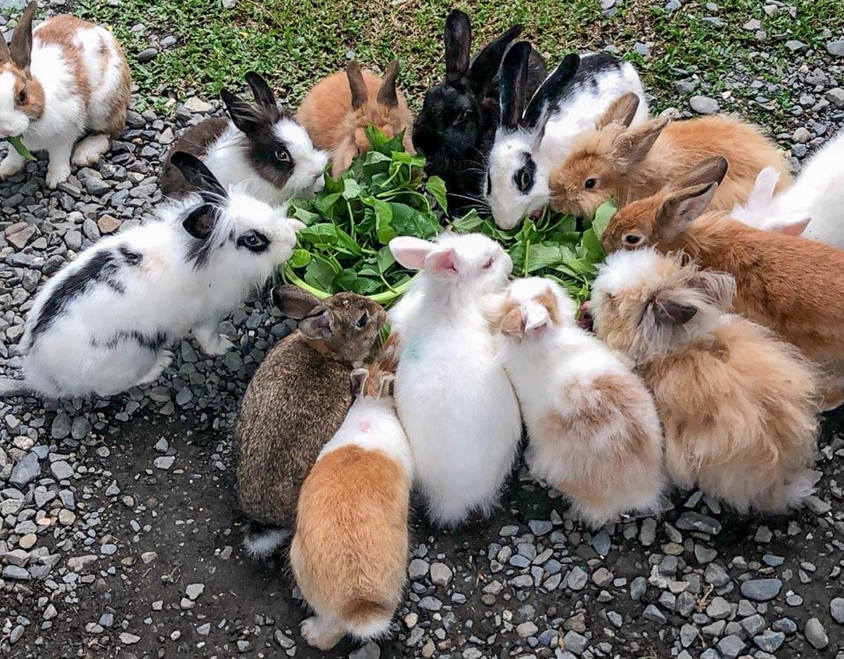 蕭家大院兔子寵物餐廳-6