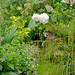 The garden at my smallholding