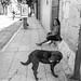 Un señor y su perro por Marcos Núñez Núñez