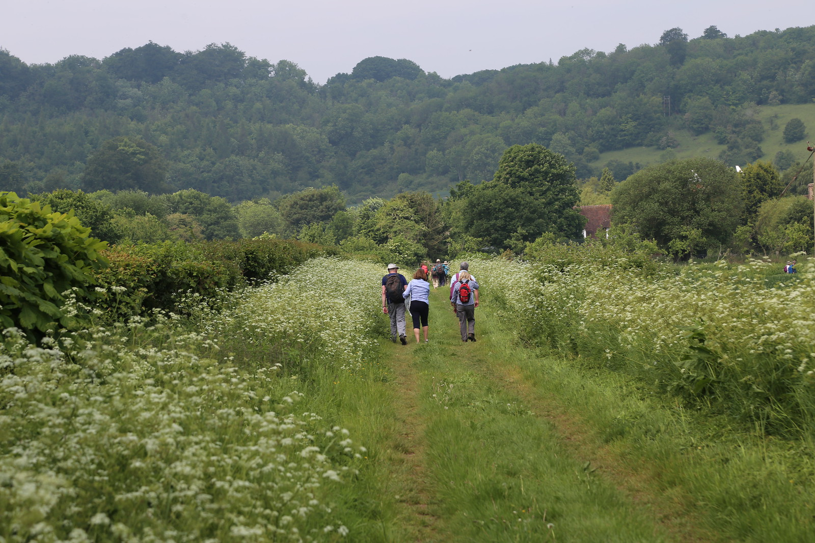 Past the Cow Parsley - Otford to Eynsford Walk