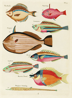 Colourful and surreal illustrations of fishes found in Moluccas (Indonesia) and the East Indies by Louis Renard (1678 -1746) from Histoire naturelle des plus rares curiositez de la mer des Indes (1754).