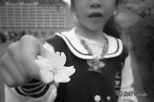 GR2作例:桜の花びらを持つ娘