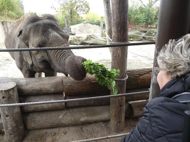 Asiatischer Elefant, Allwetterzoo Münster
