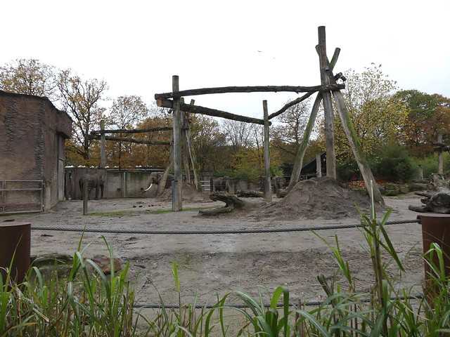 Elefantenanlage, Allwetterzoo Münster