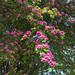 <p><a href=&quot;http://www.flickr.com/people/156002455@N08/&quot;>AKHiguchi Photography</a> posted a photo:</p>&#xA;&#xA;<p><a href=&quot;http://www.flickr.com/photos/156002455@N08/41766949525/&quot; title=&quot;_DSC8189&quot;><img src=&quot;http://farm2.staticflickr.com/1730/41766949525_fdbb9da035_m.jpg&quot; width=&quot;170&quot; height=&quot;240&quot; alt=&quot;_DSC8189&quot; /></a></p>&#xA;&#xA;