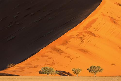 namibdesert landscape sunset namibia sanddunes camelthorntrees deepshadows desert sossusvlei rainstorm namibnaukluftnationalpark hardapregion na