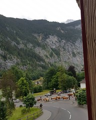Why, yes, cows running through town before 8am is a real thing. Apparently cows spend the summer in the mountains - how good for them (I think...) #switzerland #swisscows #cowbell