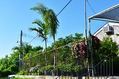 Staten Island Palms