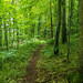 Horsehill Wood