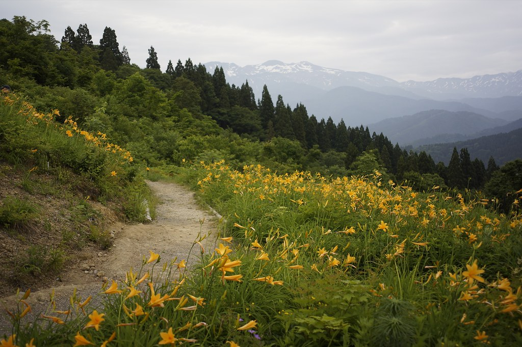 CONTAX Gレンズ総動員で挑む西山白山高山植物園その2