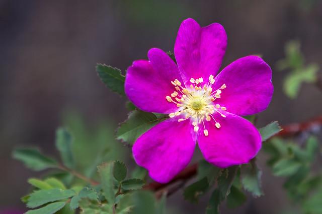 Wild-Flower-7-7D1-053018