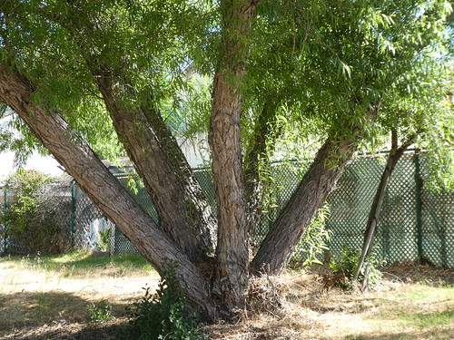 2018-06-12 - Walking around - Tall Trees