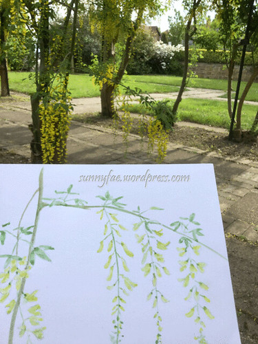 sketching yellow wisteria
