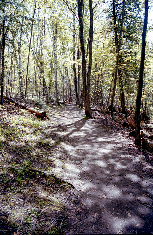 Lower Trail at Mono Cliffs_