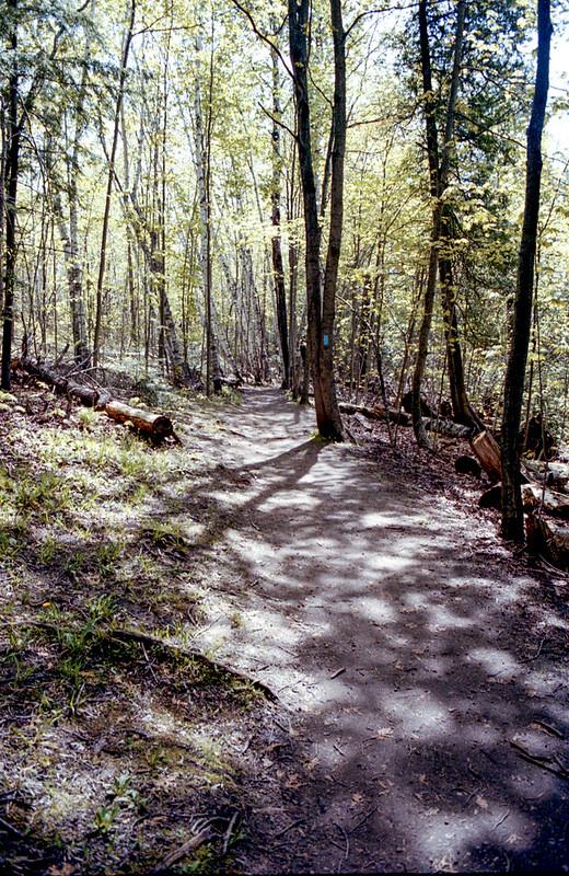 Lower Trail at Mono Cliffs_