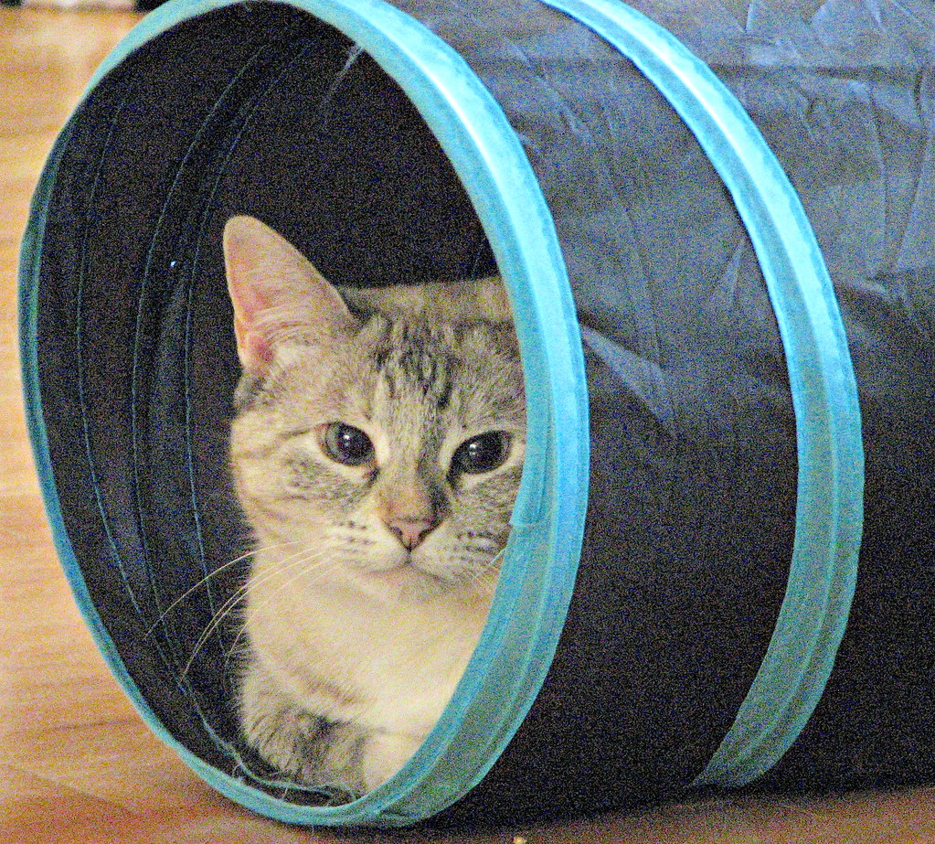 In Her Tunnel