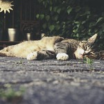 20180529-172159 - Snooze Cat Bokeh