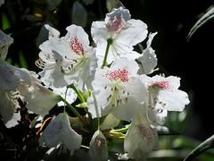 Haaga Rhododendron Park