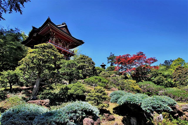 Japanese Tea Garden, Canon EOS REBEL T3, Canon EF-S 10-22mm f/3.5-4.5 USM