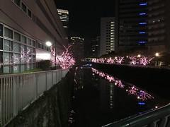 目黒川みんなのイルミネーション2018