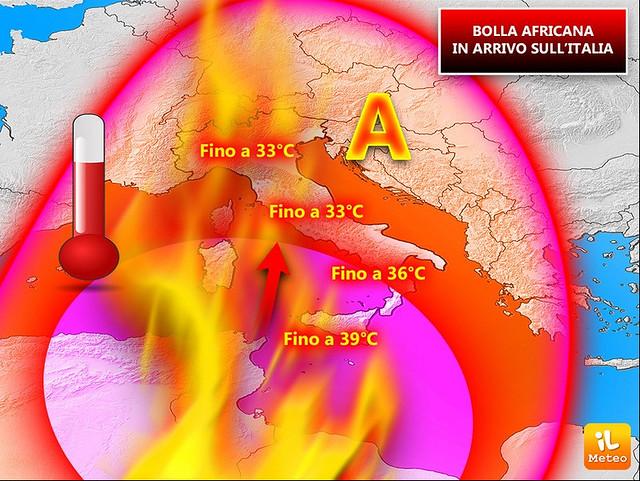 bolla-africana-italia-07618