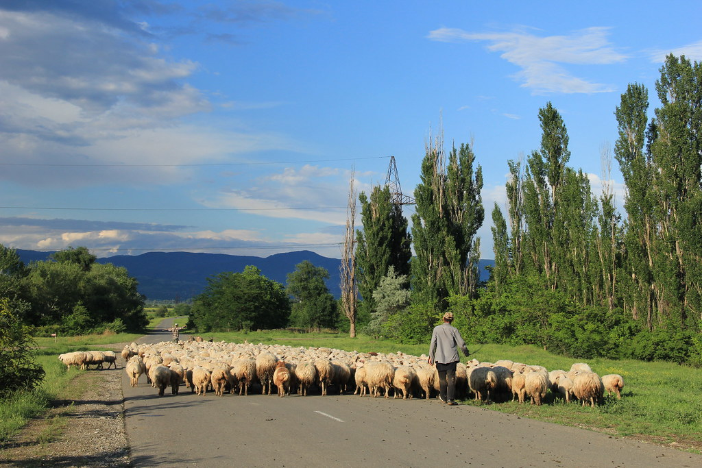Rural traffic jam! Georgia