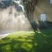 Lawn Sprinkler Water Spray