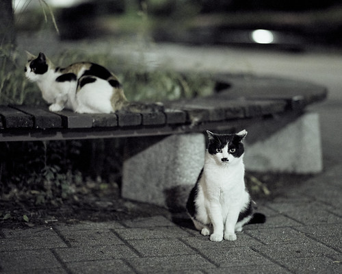 cats in night.
