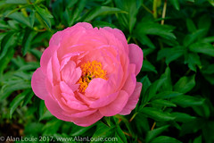 20180512 Green Spring Garden 026.jpg