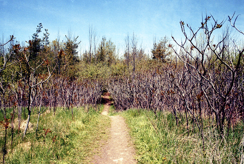 Mono Cliffs Bruce Trail Through the Short Trees