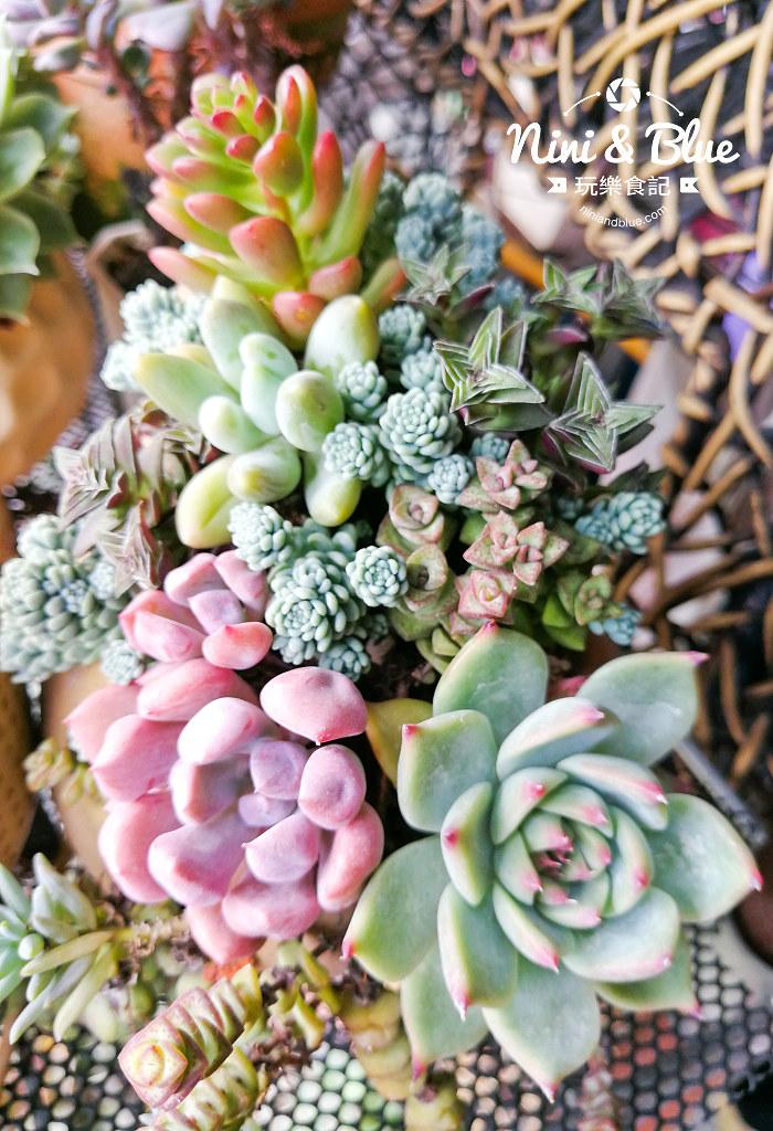 蘭心花卉 多肉植物19