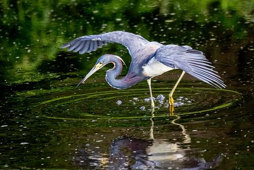 sweetwater wetlands park lily pad flower gainesville fl florida birds gators alligators