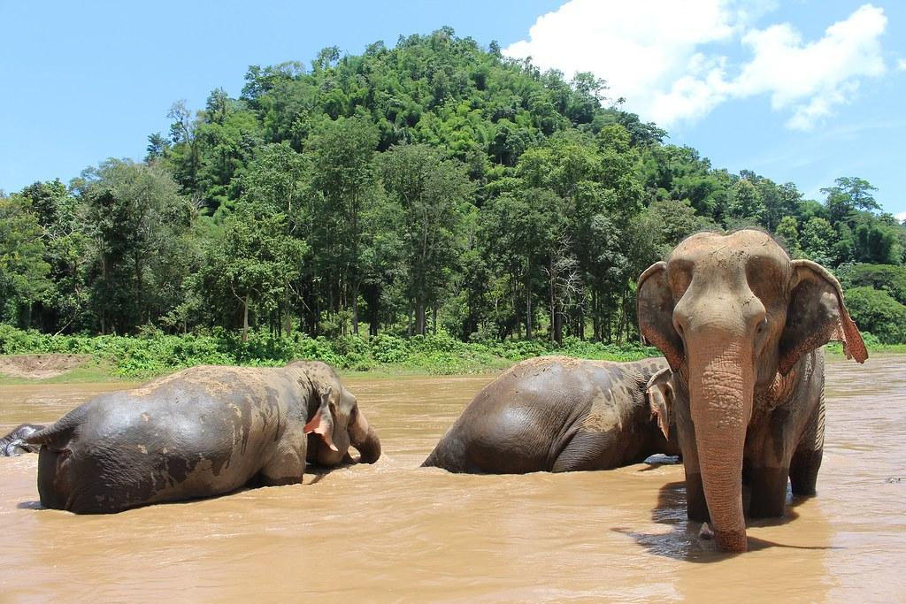 Elephant Chiang Mai