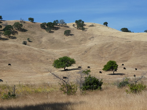 2018-05-27 - Walking around Contra Loma Park