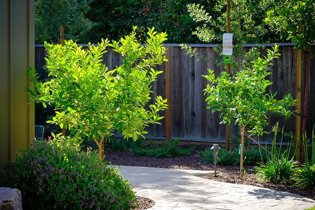 Garden 6552