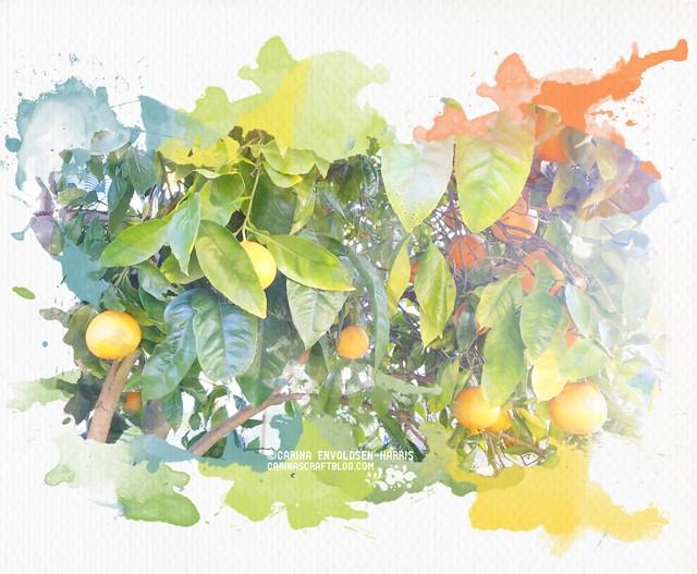 Oranges watercolour effect
