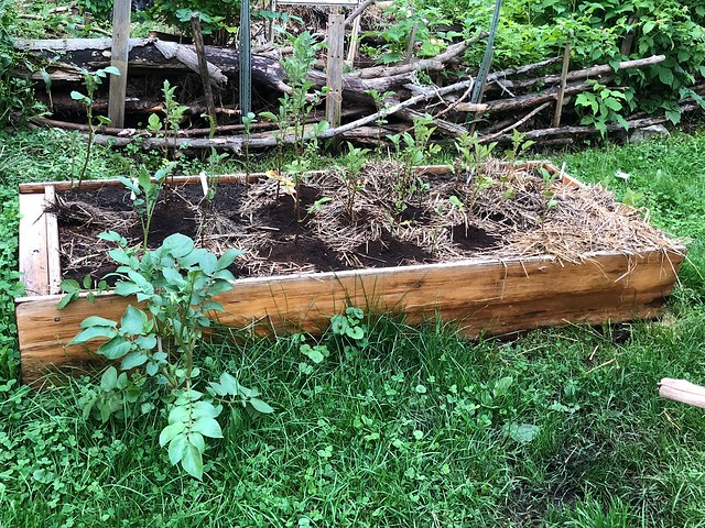 Bookcase garden gets new residents