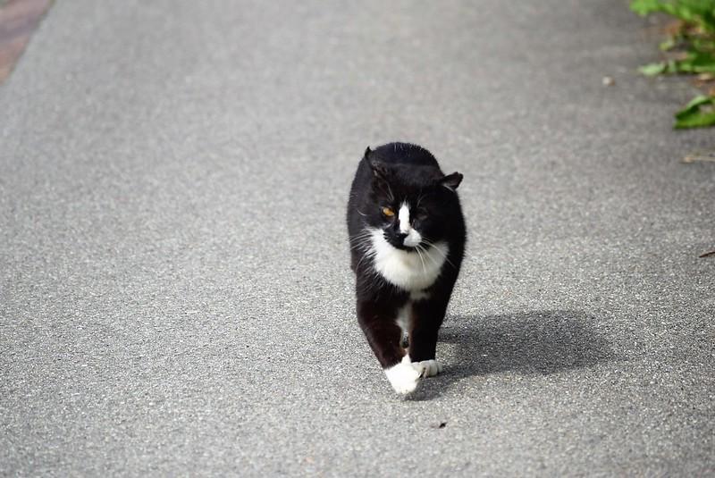 Cat 29.05 (3)
