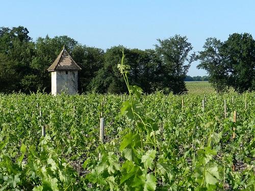 Cabane dans les vignes.