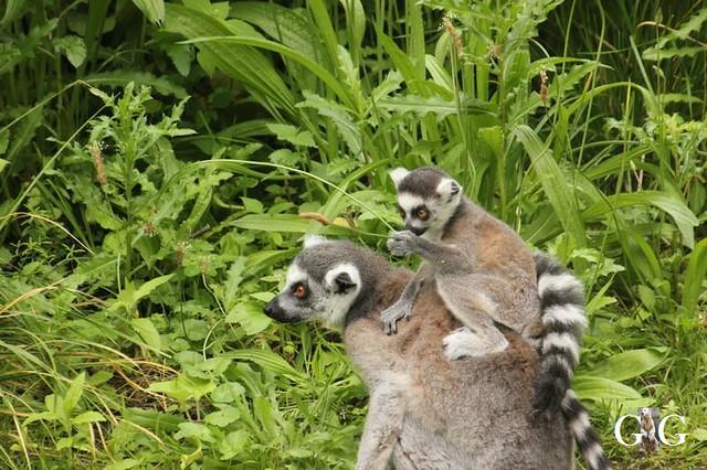 Zoo und Tierpark 03.06.201878