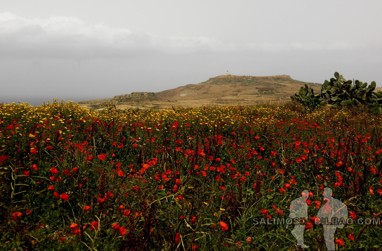 0337. Gozo